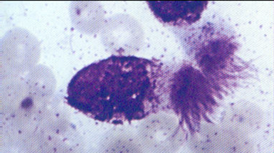 Columnar epithelial cells : Parasitology Center