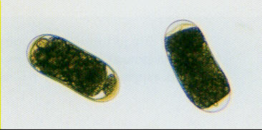Plant parasite : Parasitology Center