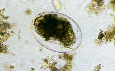 Mite egg : Parasitology Center